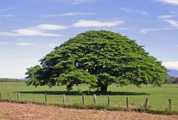 Un arbre. Source : http://data.abuledu.org/URI/50185eca-un-arbre