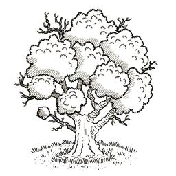 Un arbre. Source : http://data.abuledu.org/URI/52d3d15f-un-arbre
