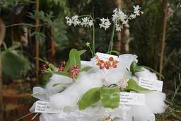 Un bouquet d'orchidées-papillons. Source : http://data.abuledu.org/URI/505f7d3e-un-bouquet-d-orchidees-papillons