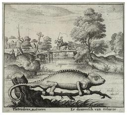 Un caméléon. Source : http://data.abuledu.org/URI/535cdac0-un-cameleon
