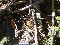 Un cèpe bien caché. Source : http://data.abuledu.org/URI/5839e93d-un-cepe-bien-cache