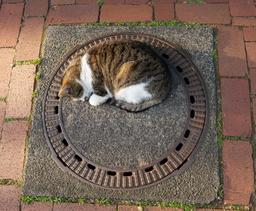 Un chat sur une plaque d'égout. Source : http://data.abuledu.org/URI/534fa3c4-un-chat-sur-une-plaque-d-egout
