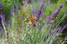 Un papillon. Source : http://data.abuledu.org/URI/47f2749d-un-papillon