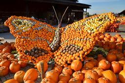 Un papillon en citrouilles. Source : http://data.abuledu.org/URI/587b801b-un-papillon-en-citrouilles