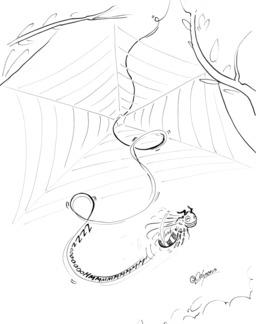 Une abeille et une toile d'araignée. Source : http://data.abuledu.org/URI/536ecaf9-une-abeille-et-une-toile-d-araignee