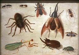 Une araignée et des insectes en 1660. Source : http://data.abuledu.org/URI/54d121e7-une-araignee-et-des-insectes-en-1660