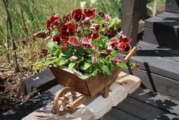 Une brouettée de fleurs. Source : http://data.abuledu.org/URI/59518c0b-une-brouettee-de-fleurs