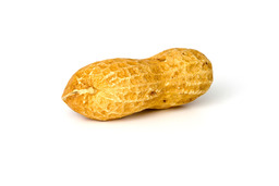Une cacahuète. Source : http://data.abuledu.org/URI/47f44ac2-une-cacahu-te