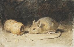 Une souris et une cacahuète. Source : http://data.abuledu.org/URI/519e920e-une-souris-et-une-cacahuete