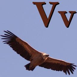 V pour le Vautour. Source : http://data.abuledu.org/URI/5332055b-v-pour-le-vautour