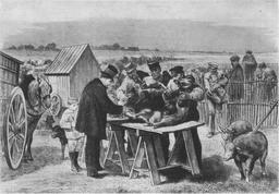 Vaccination de moutons en 1881. Source : http://data.abuledu.org/URI/518e4520-vaccination-de-moutons-en-1881
