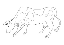 Vache. Source : http://data.abuledu.org/URI/5027d5ba-vache