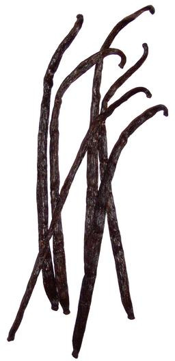 Vanille. Source : http://data.abuledu.org/URI/508a647c-vanille