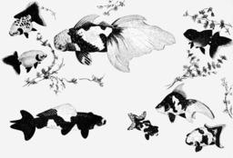 Variétés de poissons rouges au Japon. Source : http://data.abuledu.org/URI/5208193d-varietes-de-poissons-rouges-au-japon