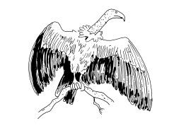 Vautour. Source : http://data.abuledu.org/URI/5027d655-vautour