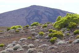 Végétation d'altitude au pied du Piton de la Fournaise. Source : http://data.abuledu.org/URI/521fa36c-vegetation-d-altitude-au-pied-du-piton-de-la-fournaise