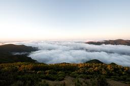 Végétation d'altitude sur l'île de Madère. Source : http://data.abuledu.org/URI/5508984f-vegetation-d-altitude-sur-l-ile-de-madere