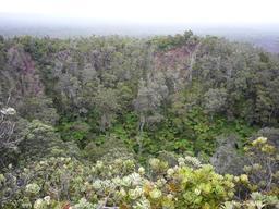 Végétation de la caldeira de Kilauea. Source : http://data.abuledu.org/URI/508d2221-vegetation-de-la-caldeira-de-kilauea