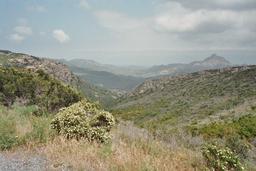 Végétation du maquis corse. Source : http://data.abuledu.org/URI/51dfb848-vegetation-du-maquis-corse