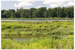 Végétation en milieu humide. Source : http://data.abuledu.org/URI/50d87a5f-vegetation-en-milieu-humide