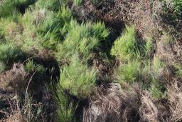 Végétation sur la friche industrielle de Trélazé. Source : http://data.abuledu.org/URI/58b34afc-vegetation-sur-la-friche-industrielle-de-trelaze
