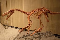 Velociraptor mount.jpg. Source : http://data.abuledu.org/URI/47f509a3-velociraptor-mount-jpg
