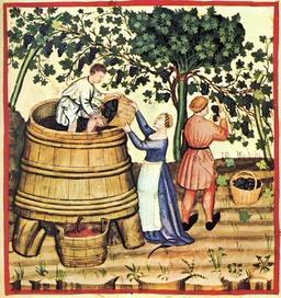Vendanges d'automne au Moyen Age. Source : http://data.abuledu.org/URI/50c902f3-vendanges-d-automne-au-moyen-age