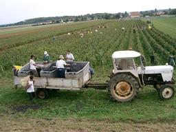 Vendanges en Bourgogne. Source : http://data.abuledu.org/URI/5273db85-vendanges-en-bourgogne