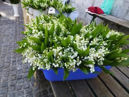 Vente de muguet pour le premier mai. Source : http://data.abuledu.org/URI/539570f3-vente-de-muguet-pour-le-premier-mai