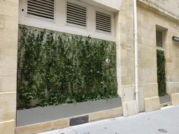 Verdure sur façade à Bordeaux. Source : http://data.abuledu.org/URI/58263437-verdure-sur-facade-a-bordeaux