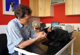 Vétérinaire. Source : http://data.abuledu.org/URI/50430db1-veterinaire