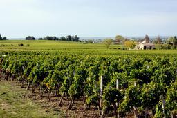 Vignes de St Emilion. Source : http://data.abuledu.org/URI/509bcb8e-vignes-de-st-emilion