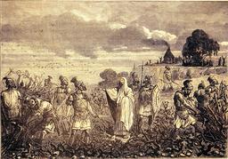 Vignes et décret de Domitien. Source : http://data.abuledu.org/URI/56bba866-vignes-et-decret-de-domitien