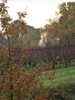 Vignoble des Graves en hiver. Source : http://data.abuledu.org/URI/56671573-vignoble-des-graves-en-hiver