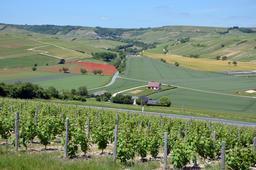 Vignobles autour de Sancerre. Source : http://data.abuledu.org/URI/5565c5b4-vignobles-autour-de-sancerre