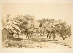 Village d'Umata dans les Mariannes en 1838. Source : http://data.abuledu.org/URI/59810749-village-d-umata-dans-les-mariannes-en-1838