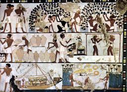 Viticulture et vinification dans l'antiquité. Source : http://data.abuledu.org/URI/573db41f-viticulture-et-vinification-dans-l-antiquite