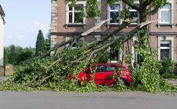 Voiture écrasée par des arbres. Source : http://data.abuledu.org/URI/54d0137a-voiture-ecrasee-par-des-arbres