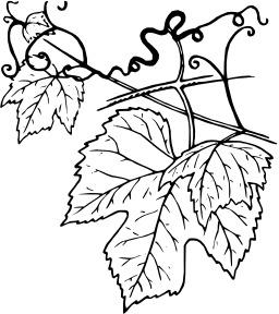 Vrilles de feuilles de vigne. Source : http://data.abuledu.org/URI/53eb8fd4-vrilles-de-feuilles-de-vigne