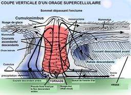 Vue en coupe d'une supercellule orageuse. Source : http://data.abuledu.org/URI/52c7d662-vue-en-coupe-d-une-supercellule-orageuse