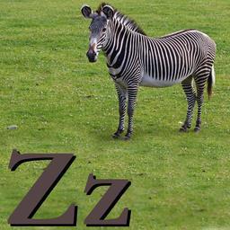 Z pour le Zèbre. Source : http://data.abuledu.org/URI/5332065d-z-pour-le-zebre