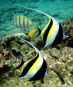 Zancle. Source : http://data.abuledu.org/URI/505c6e35-zancle