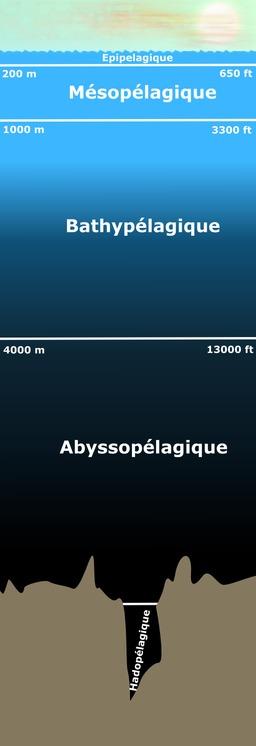 Zones pélagiques. Source : http://data.abuledu.org/URI/50b7ec8d-zones-pelagiques