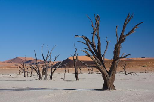 Acacias morts en Namibie