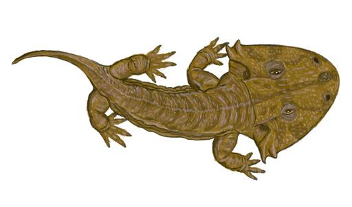 Acanthostomatops vorax