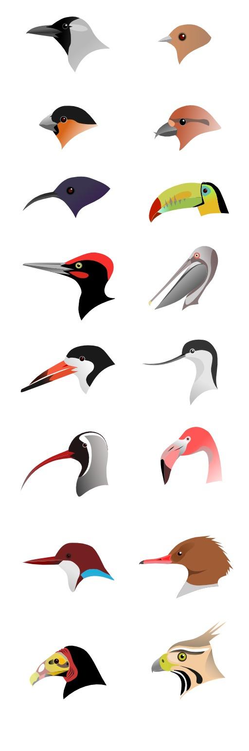 Adaptation du bec d'oiseau