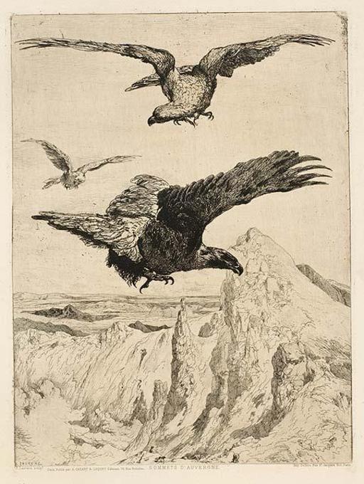 Aigles au-dessus des sommets d'Auvergne