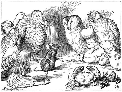 Alice et les animaux trempés