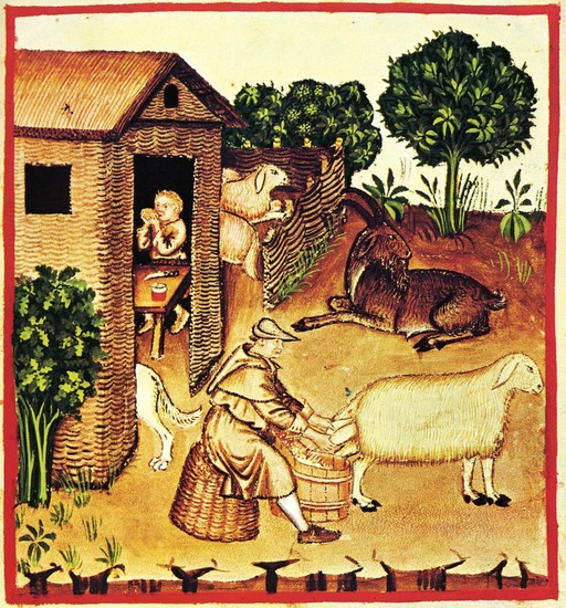 Alimentation au Moyen Age : le lait de brebis