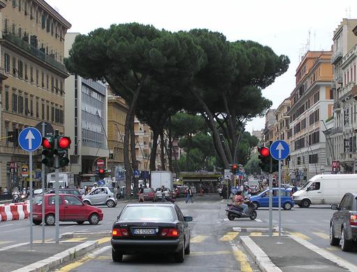 Allée de pins parasols à Rome